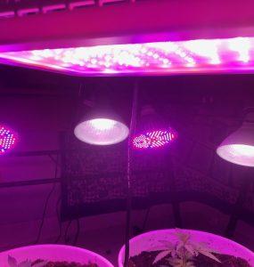 weed grow lights and bulbs