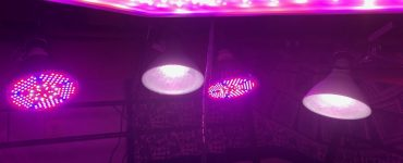 weed grow lights and bulbs